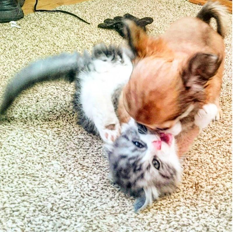 19 édes fotó cicákról és kutyákról17