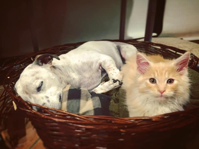 19 édes fotó cicákról és kutyákról19