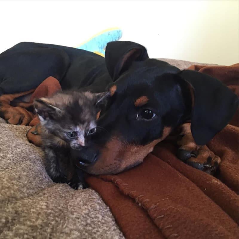 19 édes fotó cicákról és kutyákról2