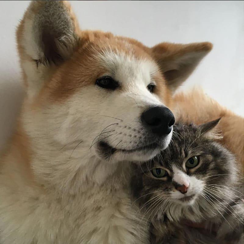 19 édes fotó cicákról és kutyákról3