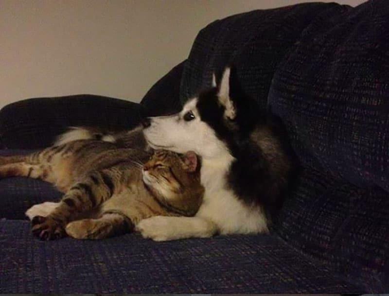 19 édes fotó cicákról és kutyákról4
