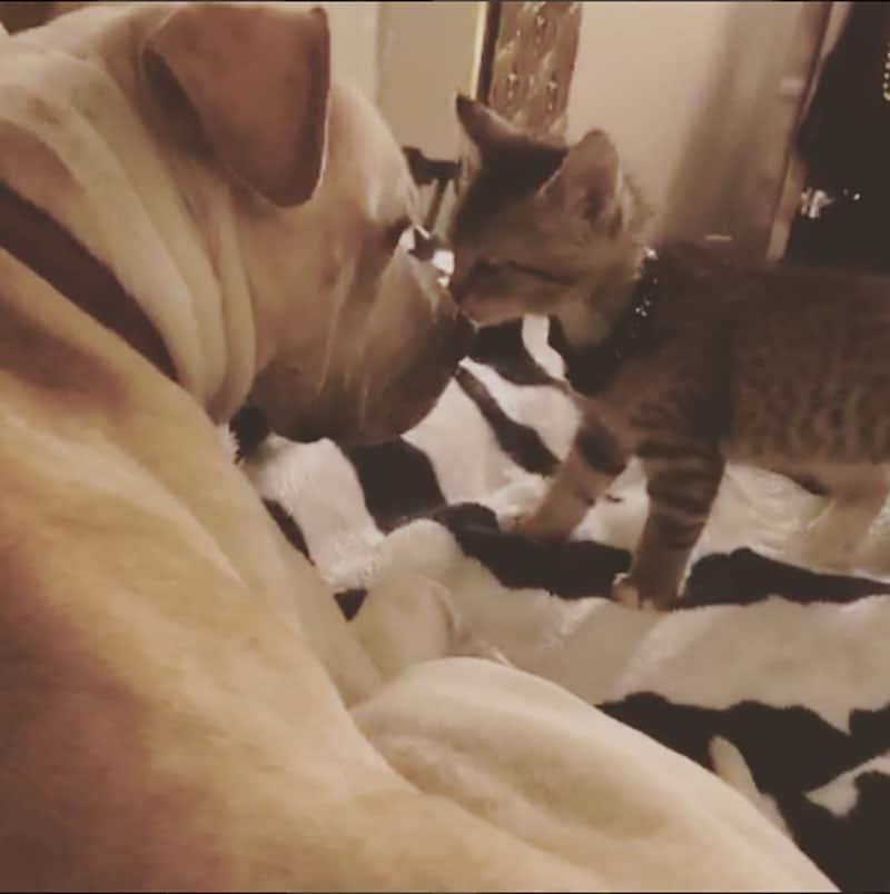 19 édes fotó cicákról és kutyákról5