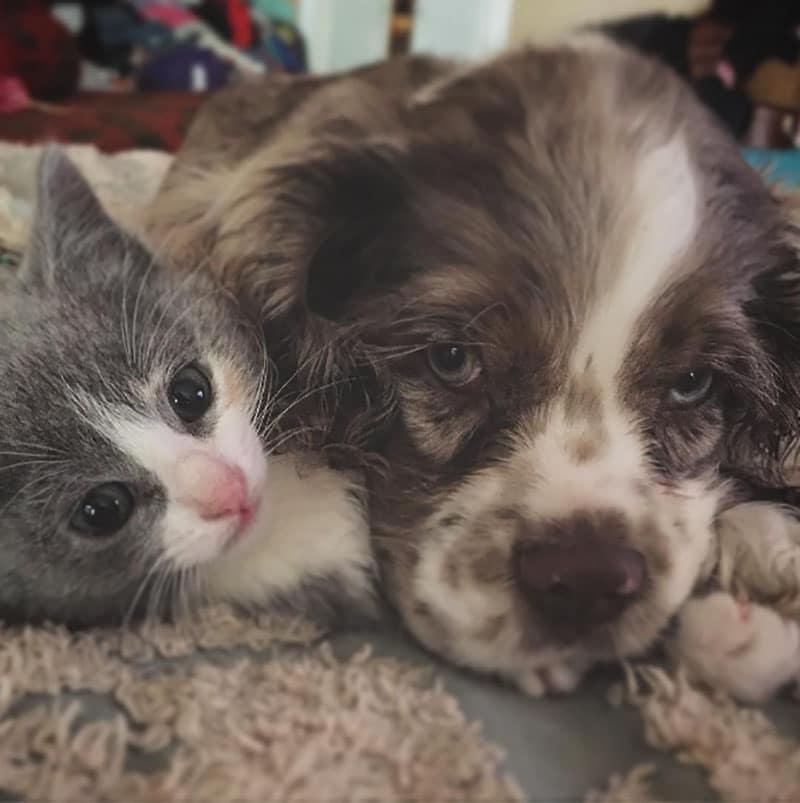 19 édes fotó cicákról és kutyákról6