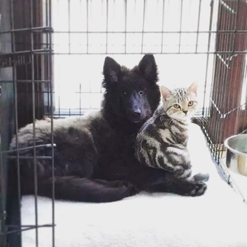 19 édes fotó cicákról és kutyákról8
