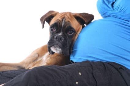 20 fotó, ahol a kutyák már türelmetlenül várják a kisbaba érkezését2