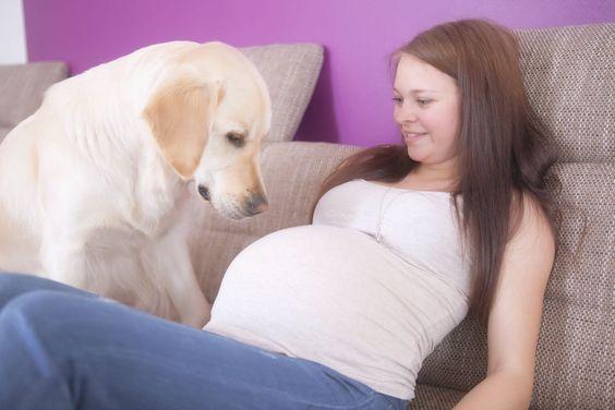 20 fotó, ahol a kutyák már türelmetlenül várják a kisbaba érkezését4
