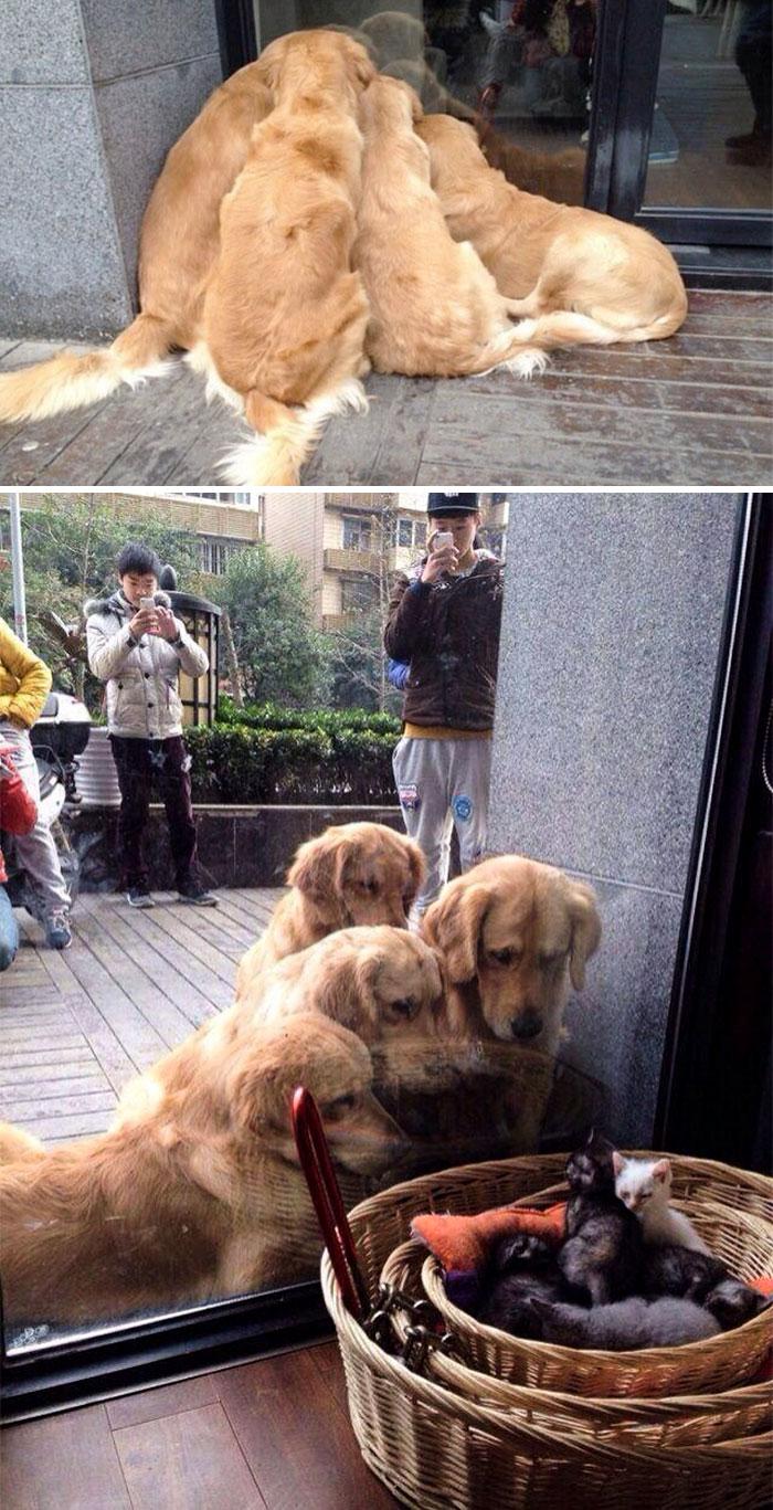 20 fotó, ami bizonyítja, hogy mindenkinek szüksége van egy Golden retrieverre1