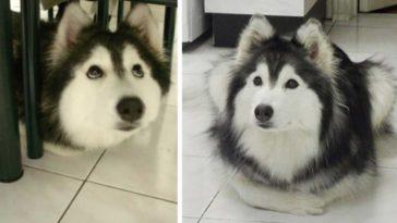 A kutya egy cicacsaláddal nőtt fel