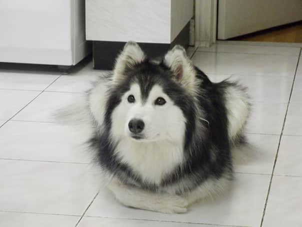 A kutya egy cicacsaláddal nőtt fel1