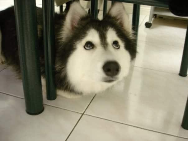 A kutya egy cicacsaláddal nőtt fel2