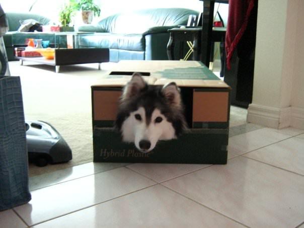 A kutya egy cicacsaláddal nőtt fel3