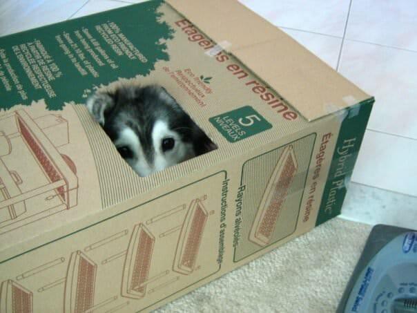 A kutya egy cicacsaláddal nőtt fel4
