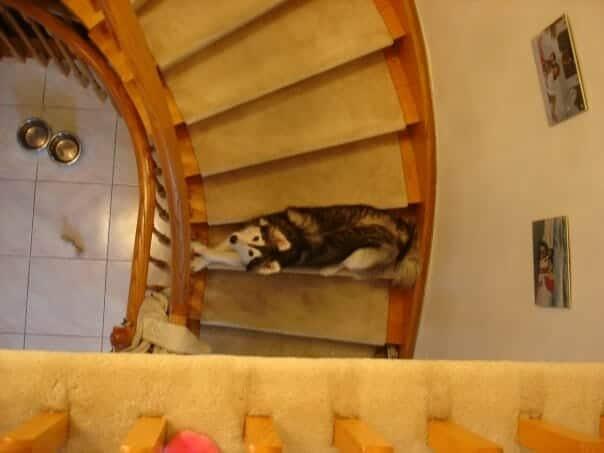 A kutya egy cicacsaláddal nőtt fel5