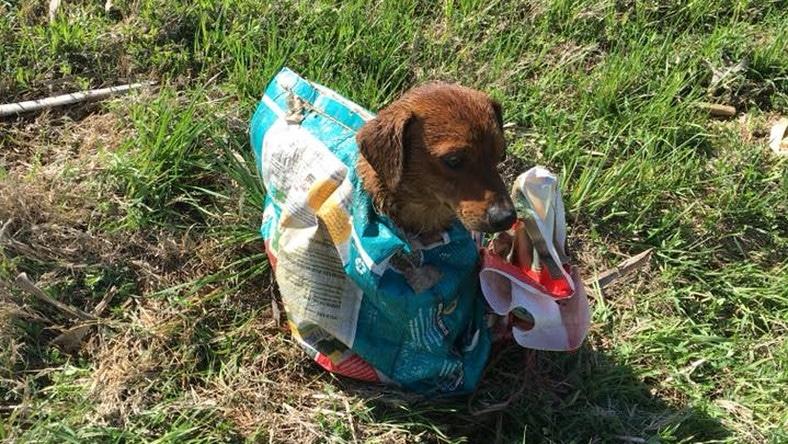 Egy kutyát találtak a zacskóban az út mellett1