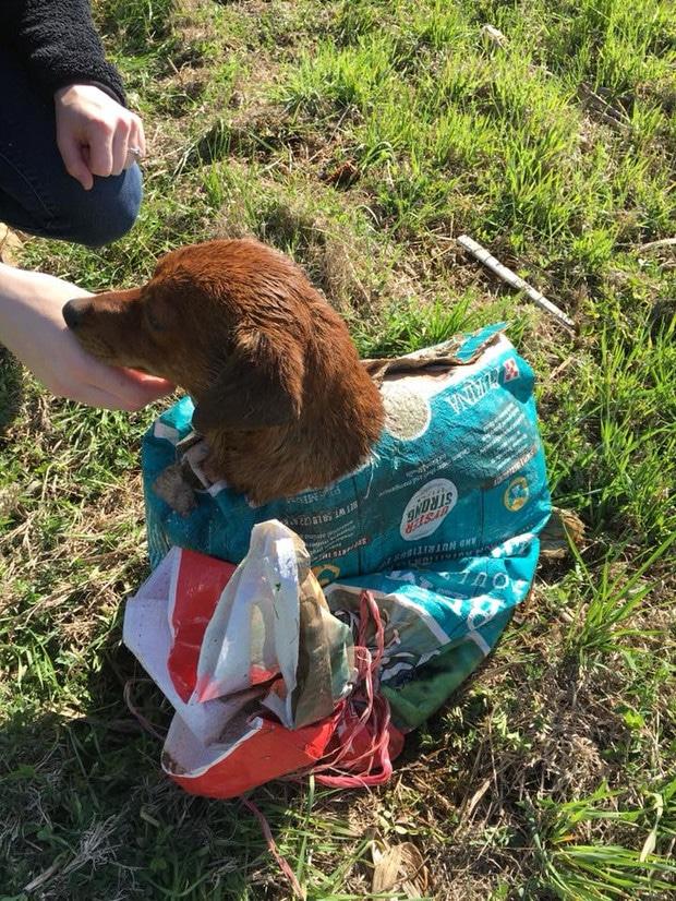 Egy kutyát találtak a zacskóban az út mellett3