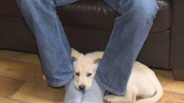 Gazdik figyelem! Ezért szeret a kutyád a lábadon ülni.3