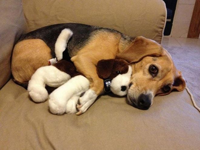 Gazdik figyelem! Ezért szeret a kutyád a lábadon ülni.8