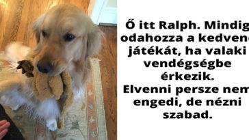 Golden-retrieverek-Facebook