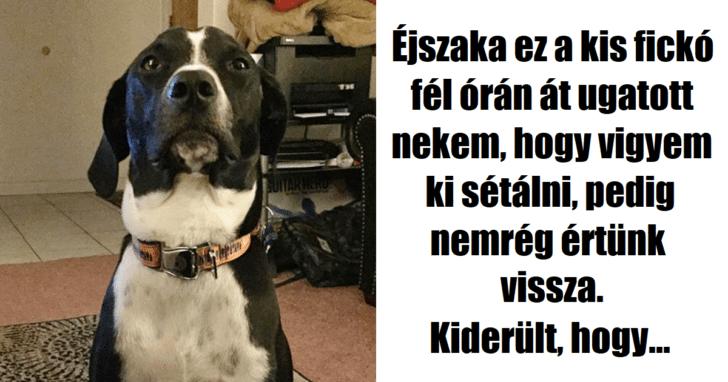 hős kutyák