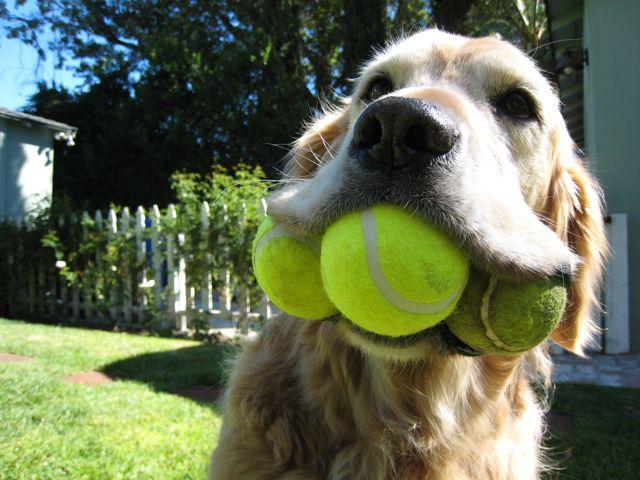 kutya kedvenc játéka1