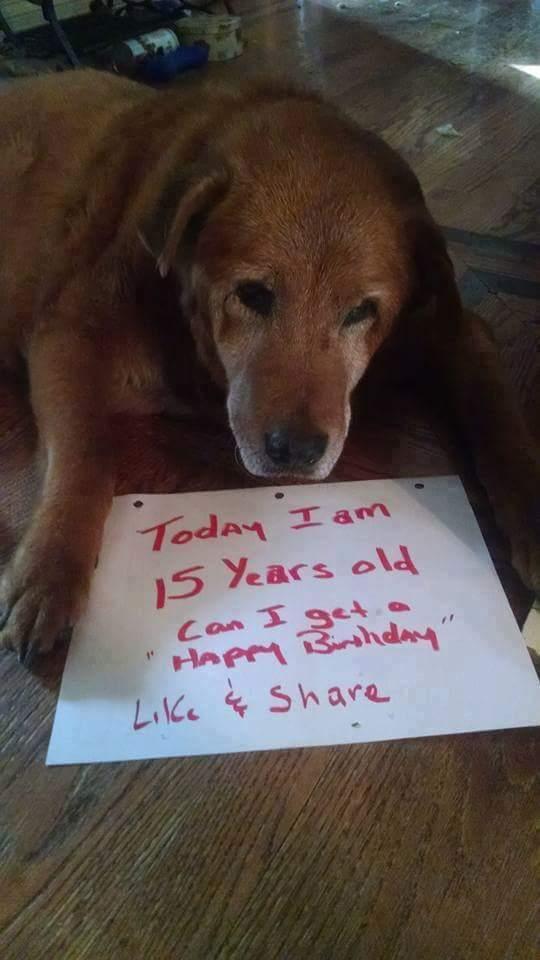 #1 Ez a drága kutya nem nagyon szereti a születésnapját, mert akkor tudja, hogy megint 1 évvel öregebb lett, pedig nem is látszik meg.
