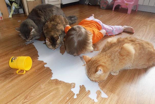#1 Miért ne ihatna tejet a cicákkal együtt