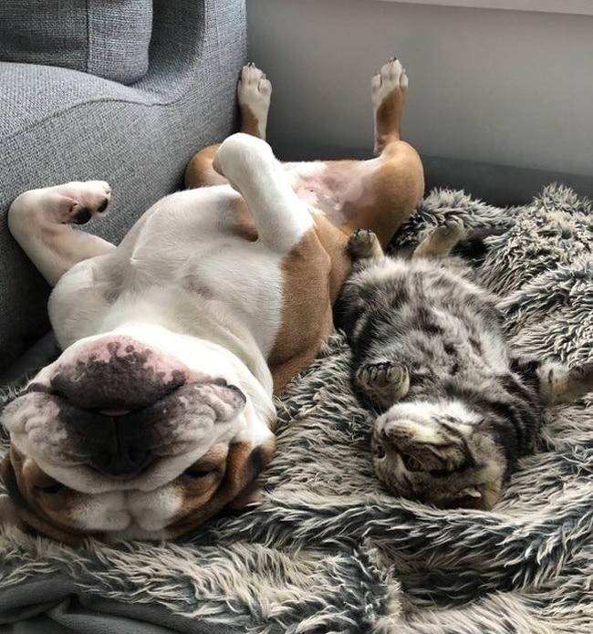#10 Egymástól ellesett alvási pózok.