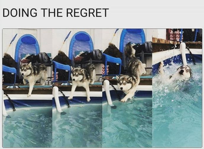 #10 Ennek a Husky kutyának fogalma sincs, hogy mi történhetett.