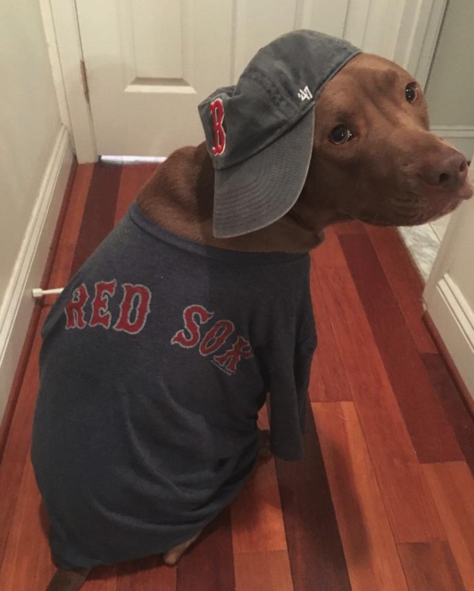 #11 Tudtad, hogy a kutyák szeretik a sportot