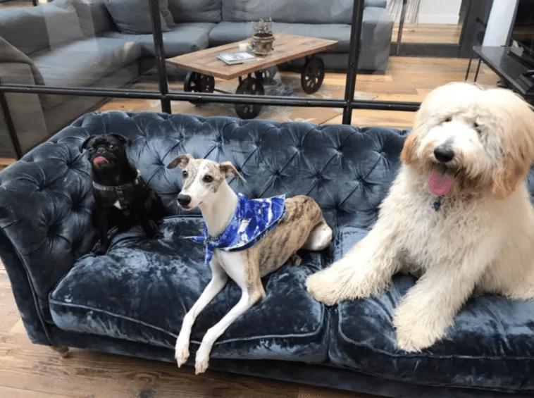 #12 Irodai kutyusoknak a pihenőhelyük.