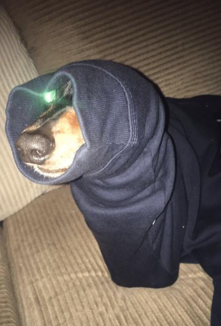 #13 Szegény kutya, akit elkapott egy pulcsi ujja.