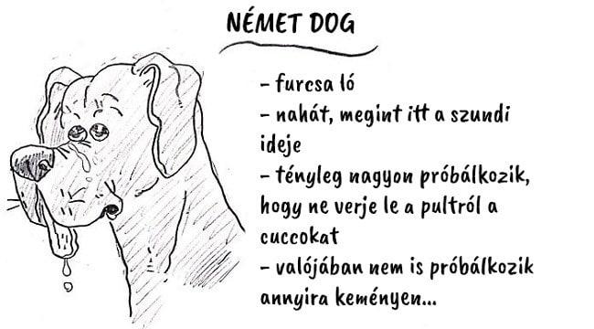 13 vicces útmutató, ami segít kiválasztani a hozzád illő kutyafajtát11