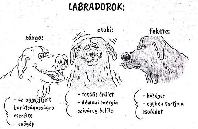 13 vicces útmutató, ami segít kiválasztani a hozzád illő kutyafajtát13