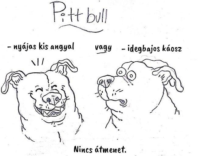 13 vicces útmutató, ami segít kiválasztani a hozzád illő kutyafajtát9