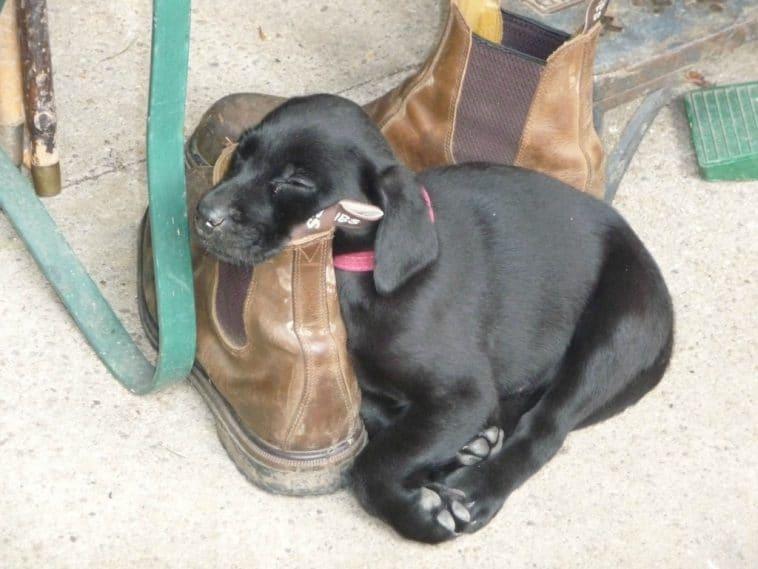 13. Végül is a cipő is szolgálhat párnaként