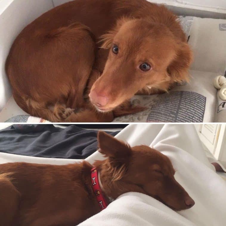 #15 Négy év után Annie megtalálta szerető otthonát. Első nap és 1 hét múlva.