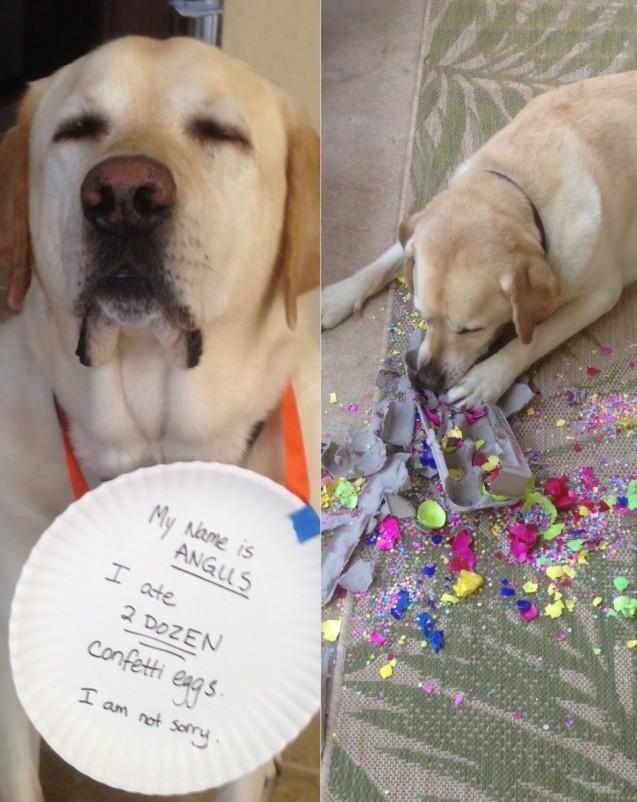 15. Az én nevem Angus, 2 tucat konfettit megettem, de nem sajnálom.