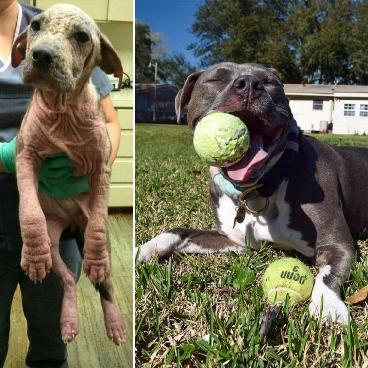 #16 Üzenem annak a személynek, aki a parkban hagyta meghalni a kutyáját, hogy remekül van. 2 év után így néz ki.