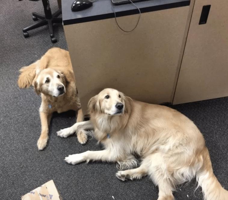 #17 Ez a két kutyus a postai részlegen dolgozik, és az a dolguk, hogy üdvözöljék az embereket.