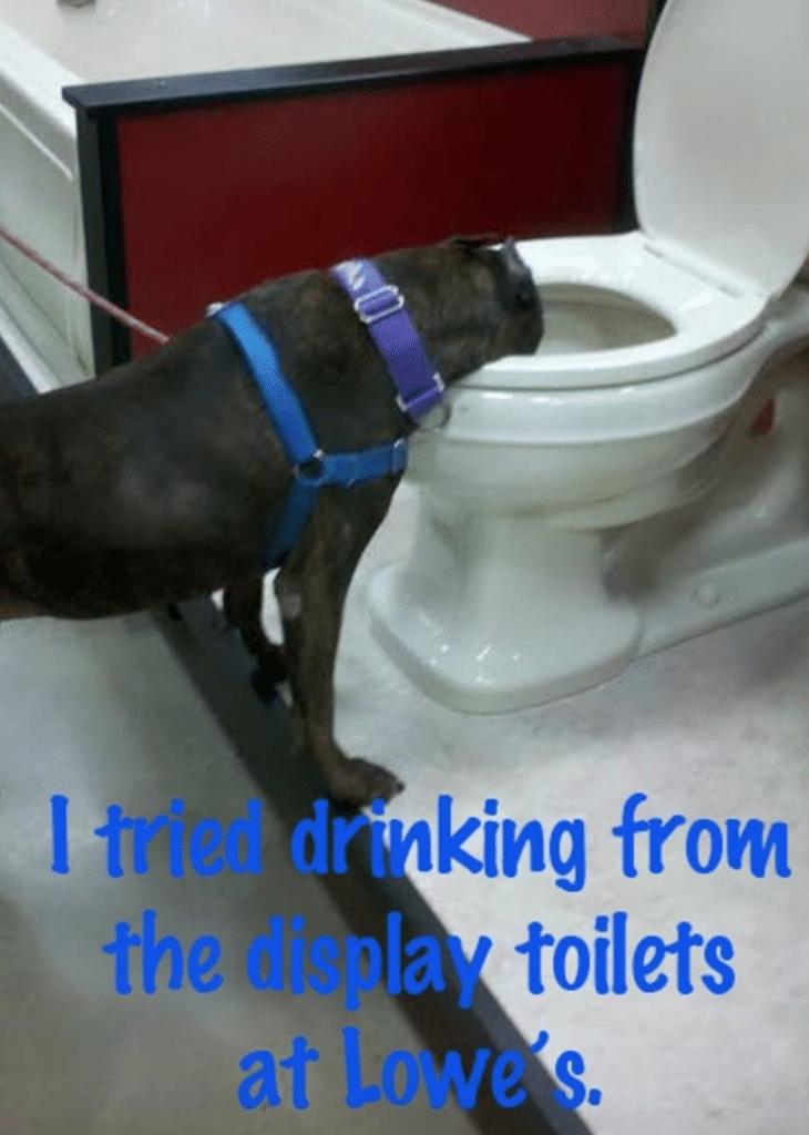17. Kipróbáltam, hogy milyen a WC kagylóból inni.