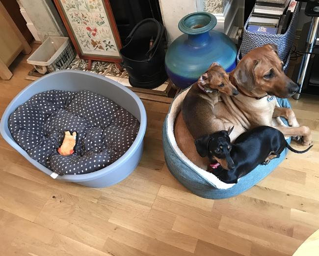 #2 Egy kutya ágyba mindannyian beleférünk.