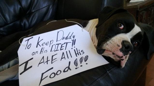 2. Amikor a kutya vigyáz a gazdája alakjára, és helyette megette a finomságot