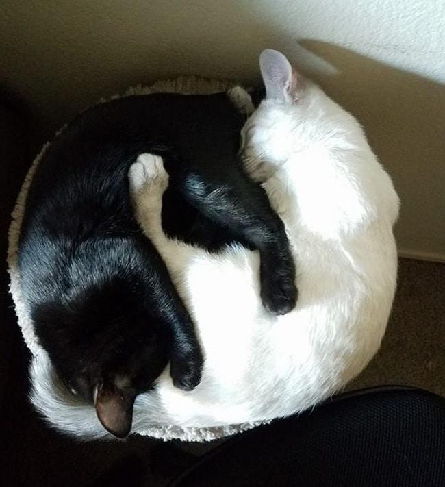 #3 A legjobb barátok imádnak összebújva aludni.