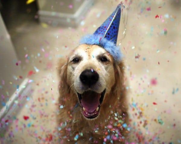 #3 A tegnapi nap folyamán töltötte be Sam a 10.-ig születésnapját, és úgy gondoltam, hogy miért ne hívhatnám el a szomszéd kutyákat egy nap kutya partira
