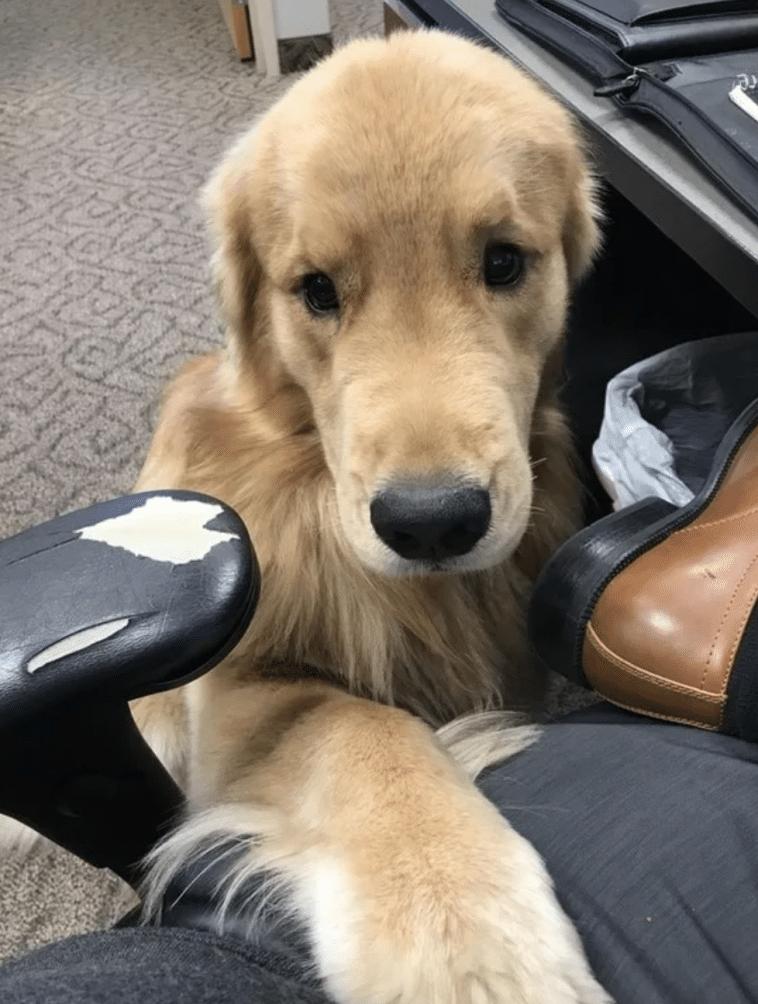 #3 Az irodai kutyus ma meglátogatott engem.