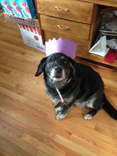 #4 Az én kutyusom ma lesz 12 éves, sajnos az egyik szemére vak, de még így is remekül érzi magát.
