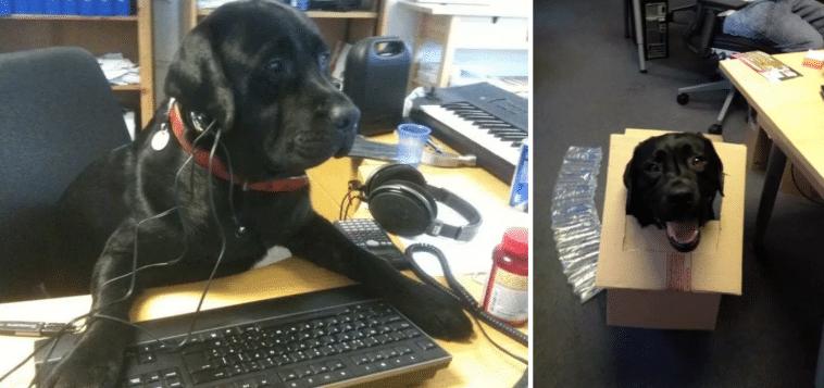 #4 Minden irodában van egy bolond kutyus.