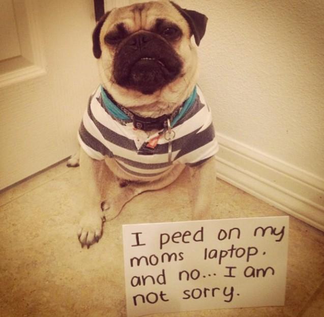 4. Amikor a gazdi laptopját elcsenem és összenyálazom, vagy éppen összenyomom, mert olyan kényelmes rajta feküdni