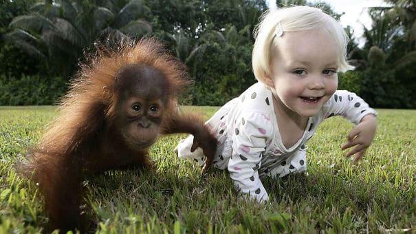 #5 Na lássuk, hogy milyen egy majom élet.