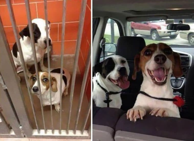 #5 Végre igazi a mosoly, nincsenek bezárva, szabad kutyusok lettek.